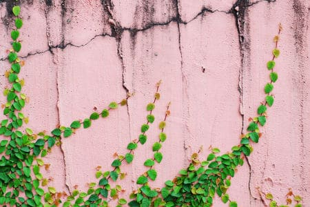Old pink cement wall with cracks